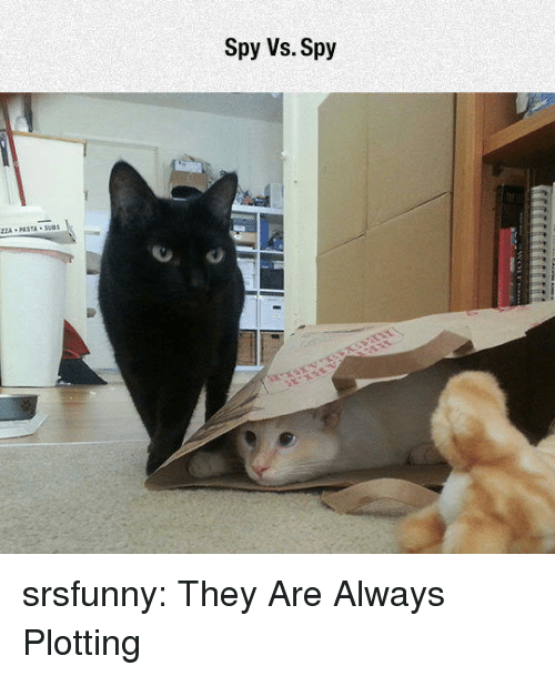 Tumblr, Blog, and Http: Spy Vs. Spy  ZZA PASTA SUB srsfunny:  They Are Always Plotting