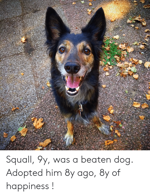 Happiness, Dog, and Him: Squall, 9y, was a beaten dog. Adopted him 8y ago, 8y of happiness !