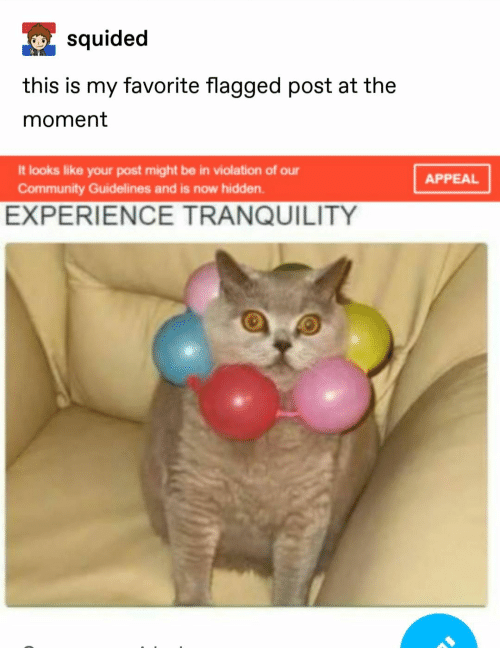 Community, Experience, and Hidden: squided  this is my favorite flagged post at the  moment  It looks like your post might be in violation of our  APPEAL  Community Guidelines and is now hidden  EXPERIENCE TRANQUILITY