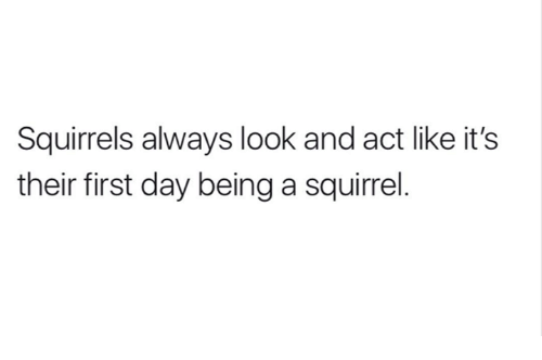 Squirrel, Humans of Tumblr, and Act: Squirrels always look and act like it's  their first day being a squirrel