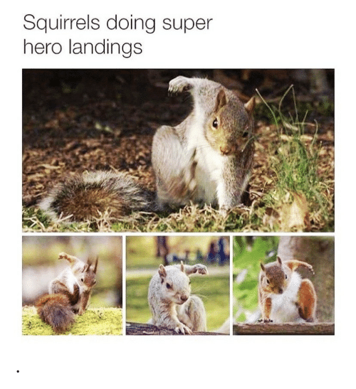 squirrels: Squirrels doing super  hero landings .