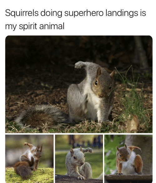 squirrels: Squirrels doing superhero landings is  my spirit animal
