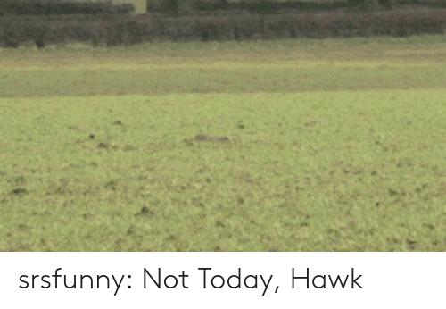 Hawkes: srsfunny:  Not Today, Hawk