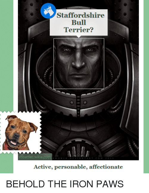 Com, Iron, and Wikia: Staffordshire  Bull  Terrier?  89  vsbattles.wikia.com  Active, personable, affectionate