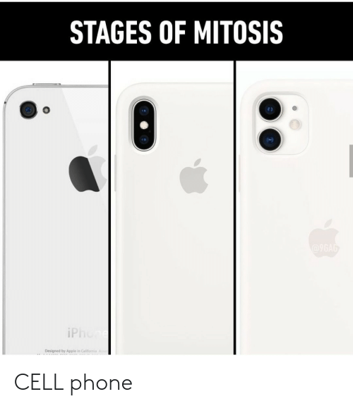 mitosis: STAGES OF MITOSIS  @9GAG  iPhone  Designed by Apple in Califomia A CELL phone
