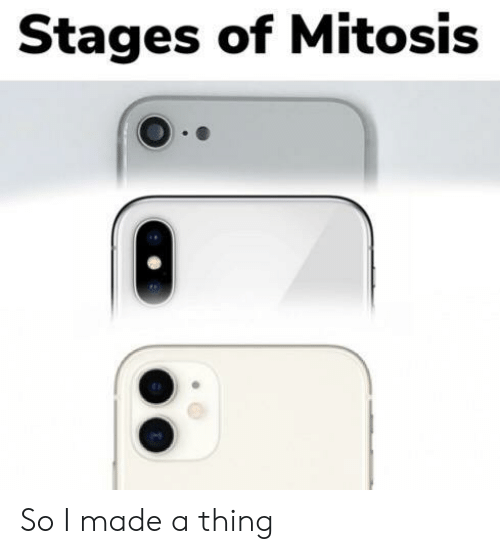 mitosis: Stages of Mitosis So I made a thing