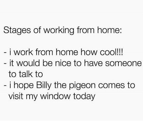 working from home: Stages of working from home:  i work from home how cool!  it would be nice to have someone  to talk to  i hope Billy the pigeon comes to  visit my window today