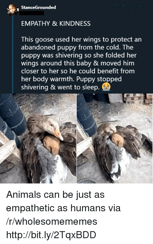 benefit: StanceGrounded  EMPATHY & KINDNESS  This goose used her wings to protect an  abandoned puppy from the cold. The  puppy was shivering so she folded her  wings around this baby & moved him  closer to her so he could benefit from  her body warmth. Puppy stopped  shivering & went to sleep Animals can be just as empathetic as humans via /r/wholesomememes http://bit.ly/2TqxBDD