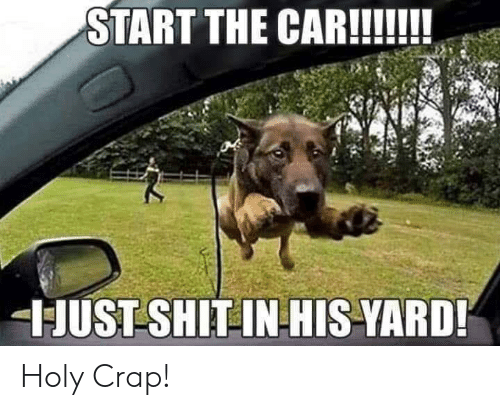 Car, Yard, and The Car: START THE CAR!!  JUST SHIT INHIS-YARD! Holy Crap!