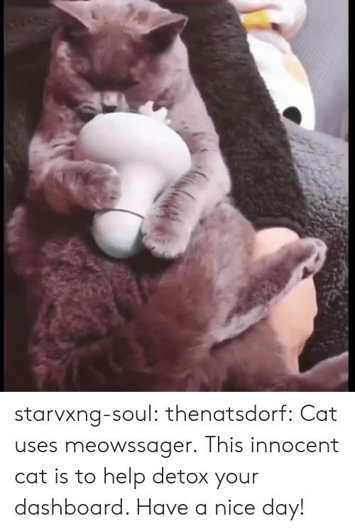 have a nice day: starvxng-soul: thenatsdorf: Cat uses meowssager. This innocent cat is to help detox your dashboard. Have a nice day!