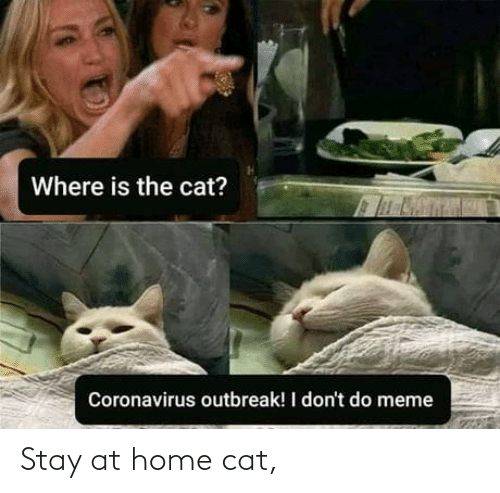 Home: Stay at home cat,