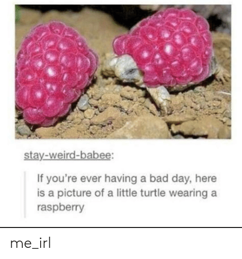 Bad, Bad Day, and Weird: stay-weird-babee:  If you're ever having a bad day, here  is a picture of a little turtle wearing  raspberry me_irl