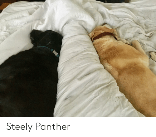 panther: Steely Panther