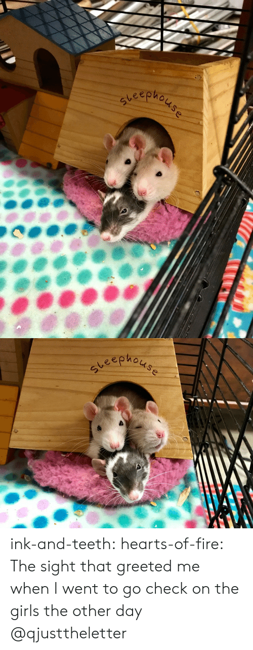 Fire, Girls, and Tumblr: steeph ink-and-teeth: hearts-of-fire:  The sight that greeted me when I went to go check on the girls the other day  @qjusttheletter