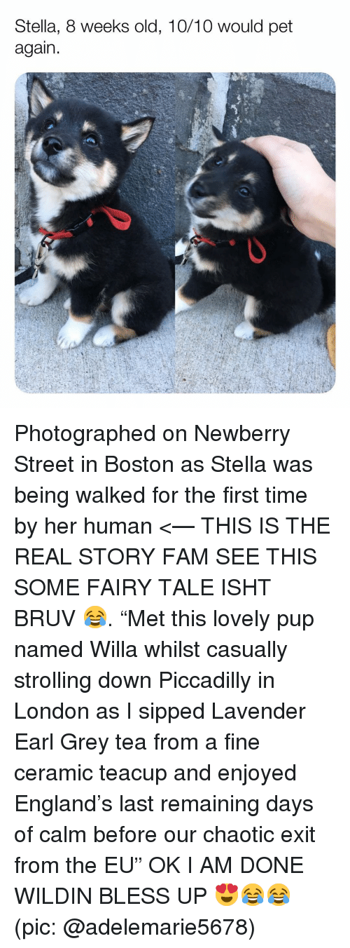"Bless up: Stella, 8 weeks old, 10/10 would pet  again Photographed on Newberry Street in Boston as Stella was being walked for the first time by her human <— THIS IS THE REAL STORY FAM SEE THIS SOME FAIRY TALE ISHT BRUV 😂. ""Met this lovely pup named Willa whilst casually strolling down Piccadilly in London as I sipped Lavender Earl Grey tea from a fine ceramic teacup and enjoyed England's last remaining days of calm before our chaotic exit from the EU"" OK I AM DONE WILDIN BLESS UP 😍😂😂 (pic: @adelemarie5678)"