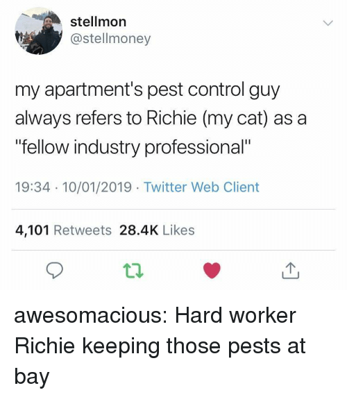 """Hard Worker: stellmor  @stellmoney  my apartment's pest control guy  always refers to Richie (my cat) as a  fellow industry professional""""  19:34 10/01/2019 Twitter Web Client  4,101 Retweets 28.4K Likes awesomacious:  Hard worker Richie keeping those pests at bay"""