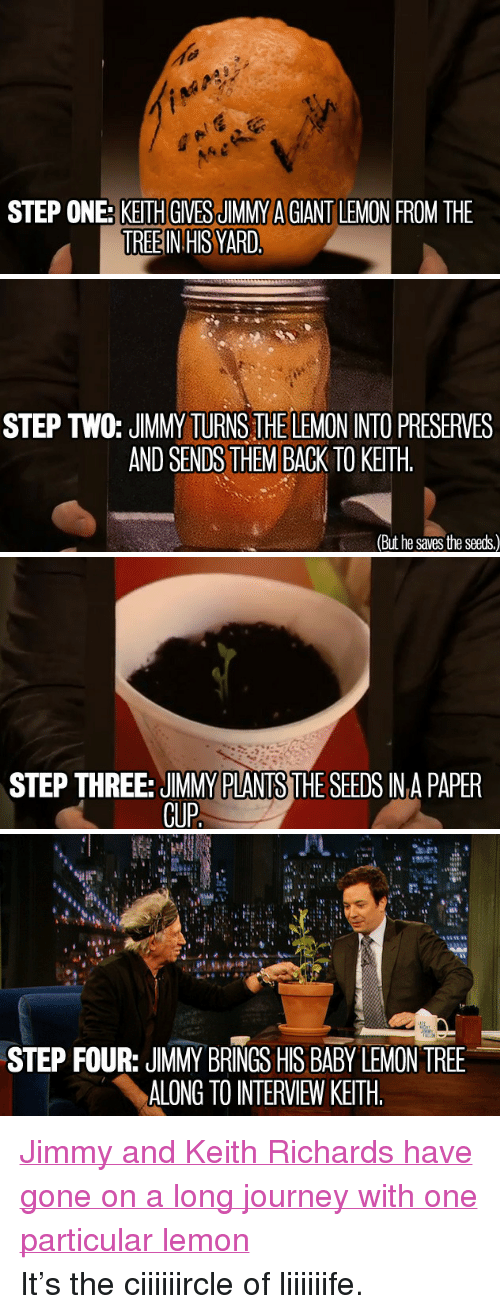 "Keith Richards: STEP ONE: KETH GIVESJIMMY A GIANT LEMON FROM THE  TREEIN HIS YARD   STEP T0: JIMMY TURNS THE LEMON INTO PRESERVES  AND SENDS THEM BACK TO KEITH  (But he saves the seeds)   STEP THREE: JIMMY PLANTS THE SEEDS IN A PAPER  GUP   STEP FOUR: JIMMY BRINGS HIS BABY LEMON TREE  ALONG TO INTERVIEW KEITH <p><a href=""http://youtu.be/wYkqBIUJTdQ"" target=""_blank"">Jimmy and Keith Richards have gone on a long journey with one particular lemon</a></p> <p>It&rsquo;s the ciiiiiircle of liiiiiife.</p>"