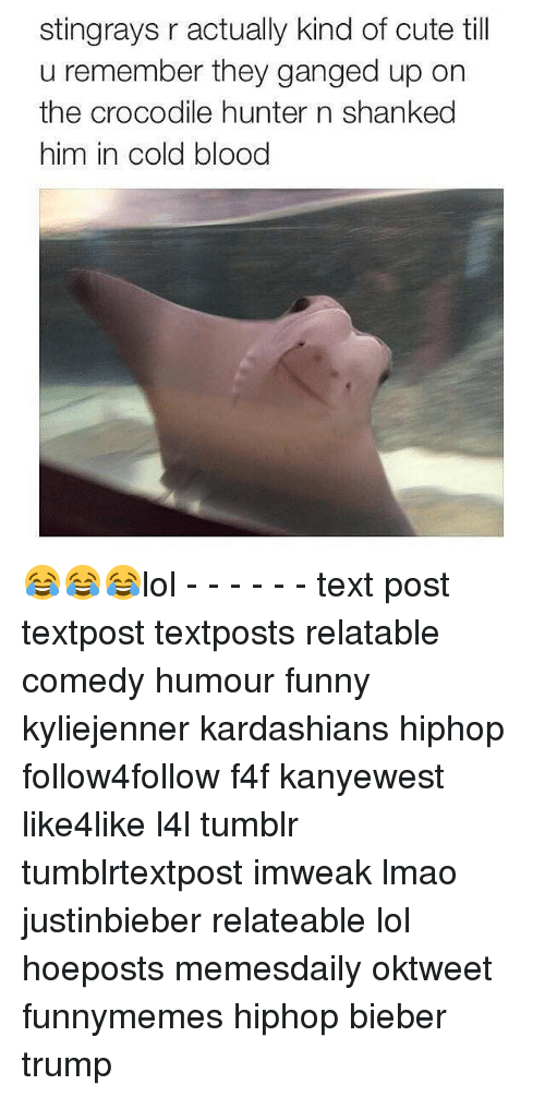 shanks: stingrays r actually kind of cute till  u remember they ganged up on  the crocodile hunter n shanked  him in cold blood 😂😂😂lol - - - - - - text post textpost textposts relatable comedy humour funny kyliejenner kardashians hiphop follow4follow f4f kanyewest like4like l4l tumblr tumblrtextpost imweak lmao justinbieber relateable lol hoeposts memesdaily oktweet funnymemes hiphop bieber trump