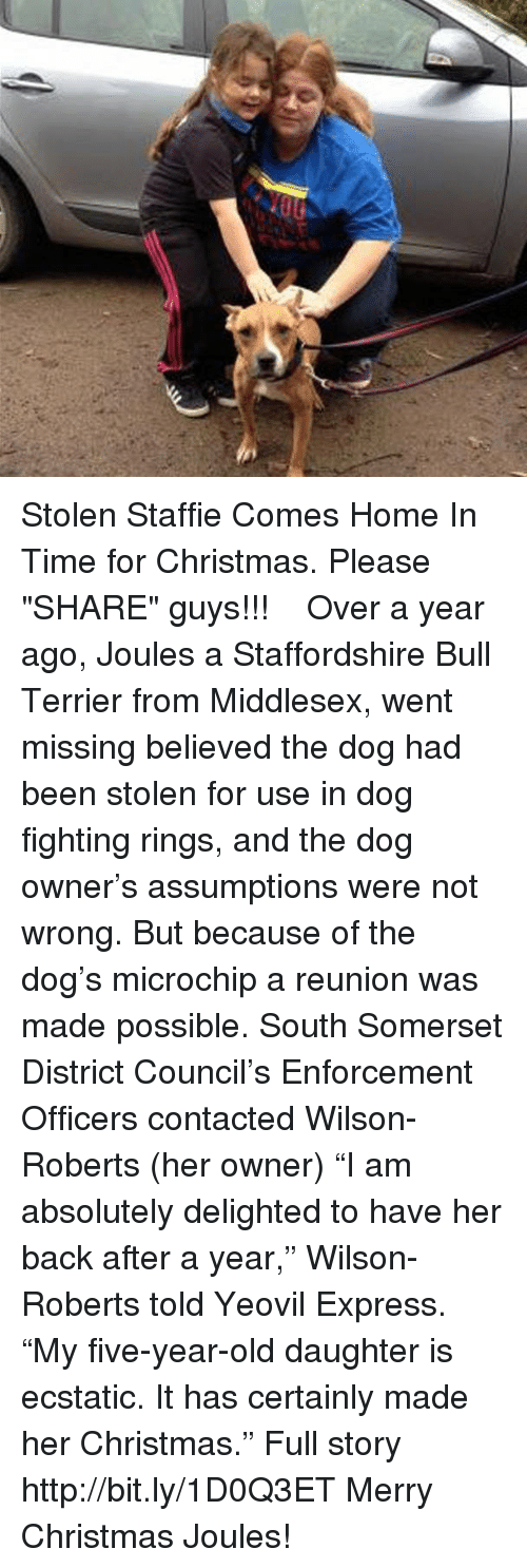 "Memes, Bulls, and Express: Stolen Staffie Comes Home In Time for Christmas.  Please ""SHARE"" guys【ツ】!!!  Over a year ago, Joules a Staffordshire Bull Terrier from Middlesex, went missing believed the dog had been stolen for use in dog fighting rings, and the dog owner's assumptions were not wrong. But because of the dog's microchip a reunion was made possible. South Somerset District Council's Enforcement Officers contacted Wilson-Roberts (her owner) ""I am absolutely delighted to have her back after a year,"" Wilson-Roberts told Yeovil Express. ""My five-year-old daughter is ecstatic. It has certainly made her Christmas."" Full story http://bit.ly/1D0Q3ET  Merry Christmas Joules!"