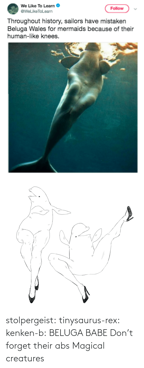 magical: stolpergeist: tinysaurus-rex:  kenken-b: BELUGA BABE Don't forget their abs  Magical creatures