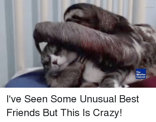 Weather Channel: Stonyul  The  Weather  Channel I've Seen Some Unusual Best Friends But This Is Crazy!