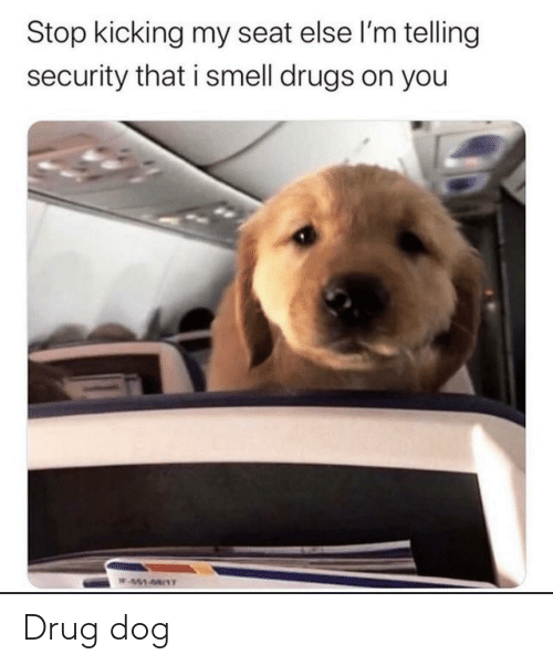 security: Stop kicking my seat else l'm telling  security that i smell drugs on you  W451-68/1T Drug dog