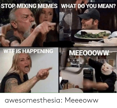 Memes What: STOP MIXING MEMES WHAT DO YOU MEAN?  WTF IS HAPPENING  MEEOOOWW awesomesthesia:  Meeeoww