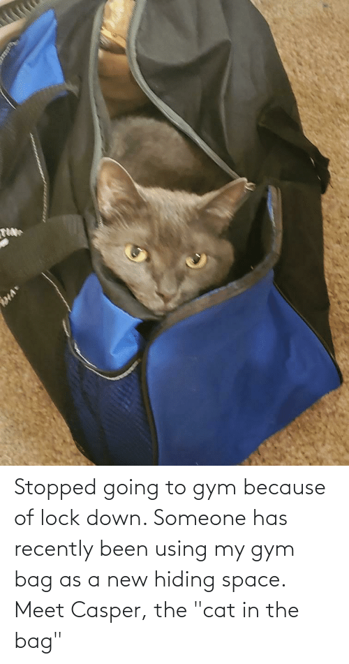 """Casper: Stopped going to gym because of lock down. Someone has recently been using my gym bag as a new hiding space. Meet Casper, the """"cat in the bag"""""""