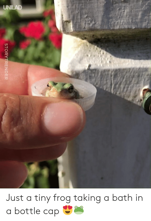 bottle cap: STORY TRENDER Just a tiny frog taking a bath in a bottle cap 😍🐸