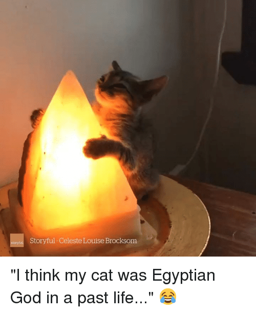 """God, Life, and Egyptian: Storyful-Celeste Louise Brocksom """"I think my cat was Egyptian God in a past life..."""" 😂"""