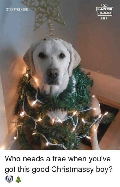 Day 4: STORYTRENDER  LADVENT  DAY 4 Who needs a tree when you've got this good Christmassy boy? 🐶🎄