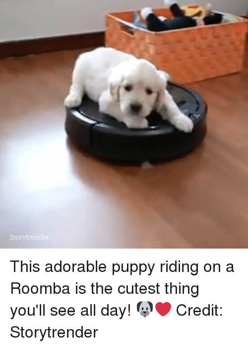 adorable puppy: Storytrender This adorable puppy riding on a Roomba is the cutest thing you'll see all day! 🐶❤️  Credit: Storytrender