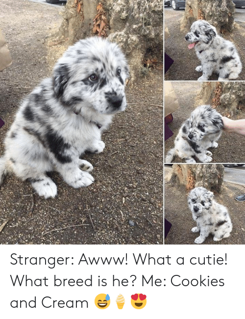 Breed: Stranger: Awww! What a cutie! What breed is he?  Me: Cookies and Cream  😅🍦😍