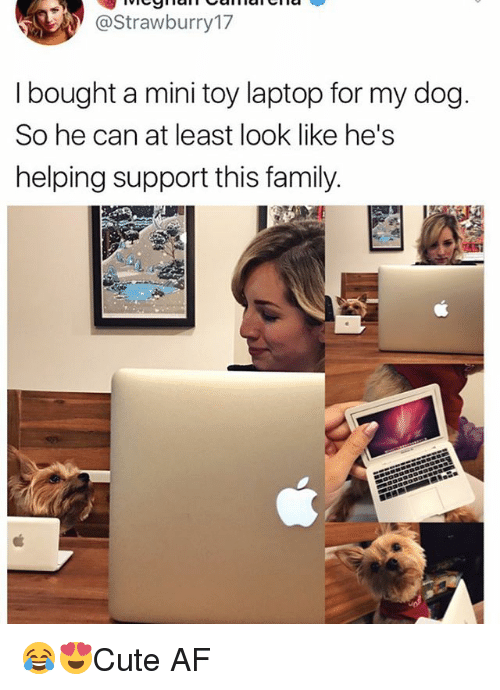 dogged: @Strawburry17  I bought a mini toy laptop for my dog  So he can at least look like he's  helping support this family 😂😍Cute AF