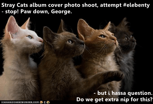 cover photo: Stray Cats album cover photo shoot, attempt #elebenty  - stop! Paw down, George.  - but i hassa question.  Do we get extra nip for this?  ICANHASCHEEZBURGER.COM