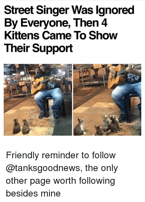 Memes, Kittens, and 🤖: Street Singer Was lgnored  By Everyone, Then 4  Kittens Came To Show  Their Support Friendly reminder to follow @tanksgoodnews, the only other page worth following besides mine