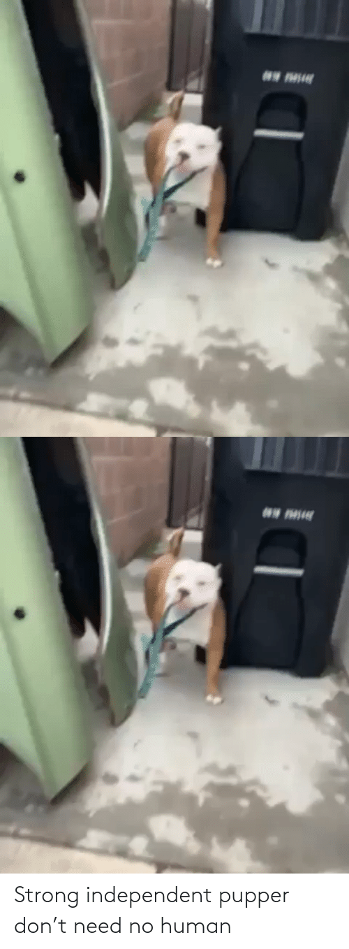 human: Strong independent pupper don't need no human