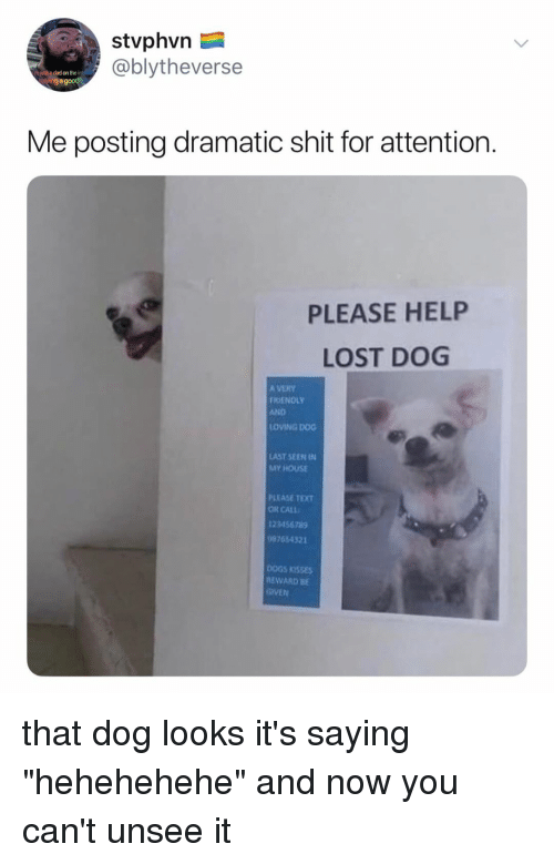 """ogs: stvphvn  @blytheverse  h just a dad on the i  avinga good  Me posting dramatic shit for attention.  PLEASE HELP  LOST DOG  A VERY  FRIENOLY  AND  OVING DOG  AST SEEN IN  MY HOUSE  PLEASE TEXT  OR CALL  23456789  7454321  OGS KISSES  EWARD BE  GIVEN that dog looks it's saying """"hehehehehe"""" and now you can't unsee it"""