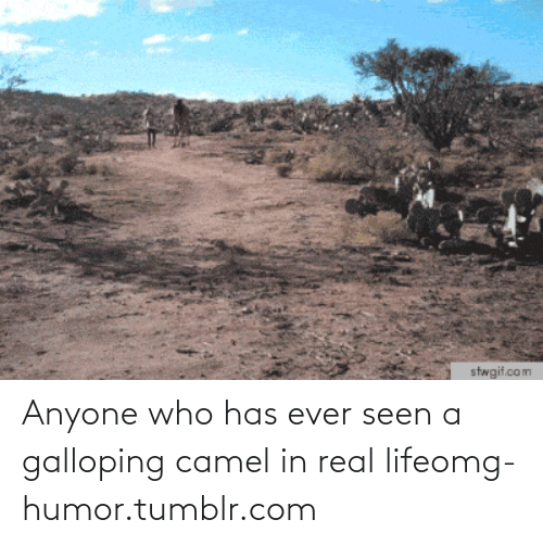 Galloping: stwgif.com Anyone who has ever seen a galloping camel in real lifeomg-humor.tumblr.com