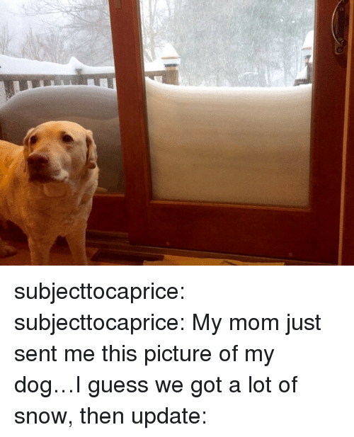 0 9: subjecttocaprice:  subjecttocaprice:  My mom just sent me this picture of my dog…I guess we got a lot of snow, then  update: