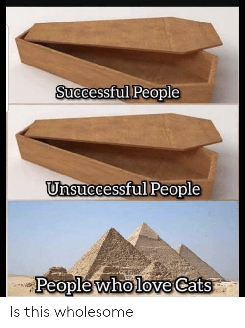 Cats, Wholesome, and This: Successful People  Unsuccessful People  People wholoe Cats Is this wholesome
