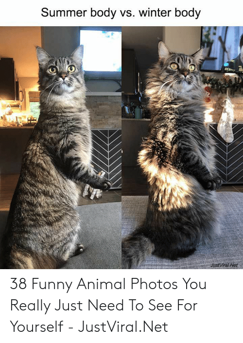 funny animal: Summer body vs. winter body  JustViral Net 38 Funny Animal Photos You Really Just Need To See For Yourself - JustViral.Net
