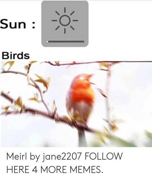 Dank, Memes, and Target: Sun .  Birds Meirl by jane2207 FOLLOW HERE 4 MORE MEMES.