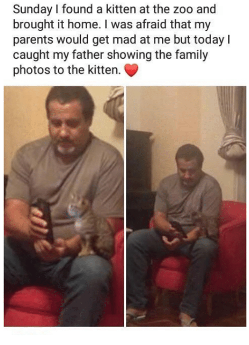 Get Mad: Sunday I found a kitten at the zoo and  brought it home. I was afraid that my  parents would get mad at me but todayl  caught my father showing the family  photos to the kitten.