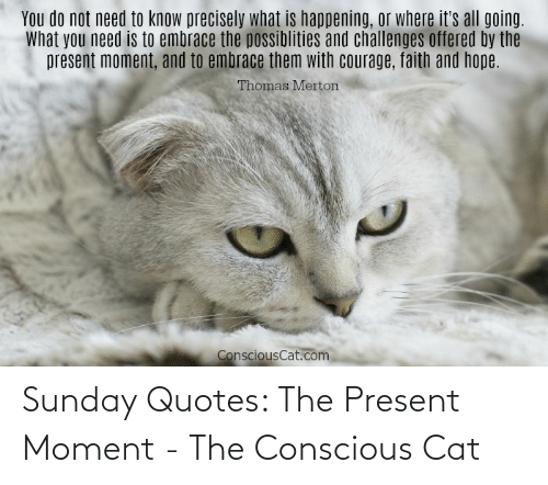 Sunday: Sunday Quotes: The Present Moment - The Conscious Cat