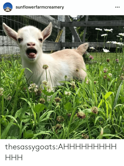 Target, Tumblr, and Blog: sunflowerfarmcreamery thesassygoats:AHHHHHHHHHHHH