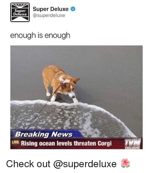 Corgi, Memes, and News: Super  Deluxe  Super Deluxe  @superdeluxe  enough is enough  Breaking News  LIVE Rising ocean levels threaten Corgi Check out @superdeluxe 🌺