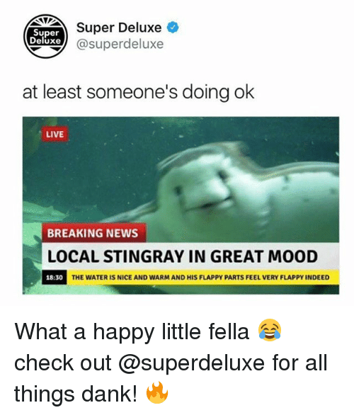 danke: Super Deluxe  Super  eluxe@superdeluxe  at least someone's doing ok  LIVE  BREAKING NEWS  LOCAL STINGRAY IN GREAT MOOD  18:30  THE WATER IS NICE AND WARM AND HIS FLAPPY PARTS FEEL VERY FLAPPY INDEED What a happy little fella 😂 check out @superdeluxe for all things dank! 🔥