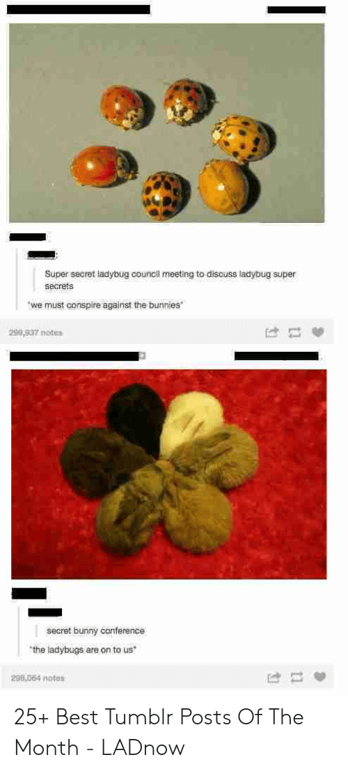 Bunnies, Tumblr, and Best: Super secret ladybug council meeting to discuss ladybug super  secrets  we must conspire against the bunnies  299,937 notes  secret bunny canference  the ladybugs are on to us  298,064 noten 25+ Best Tumblr Posts Of The Month - LADnow
