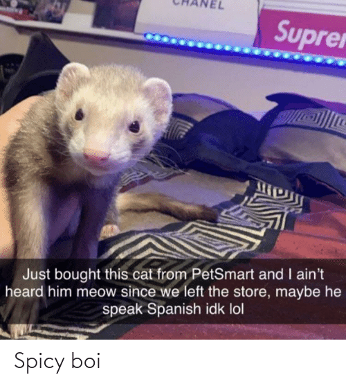 Just Bought: Suprer  Just bought this cat from PetSmart and I ain't  heard him meow since we left the store, maybe he  speak Spanish idk lol Spicy boi